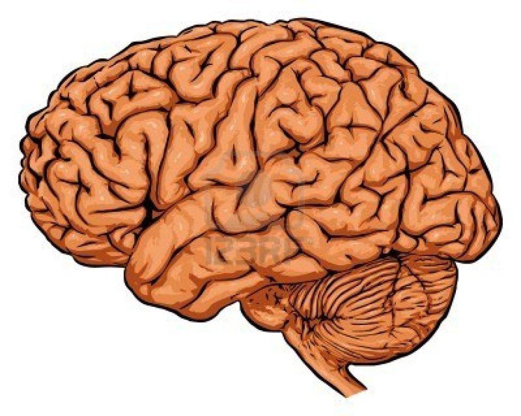 2470180-brain