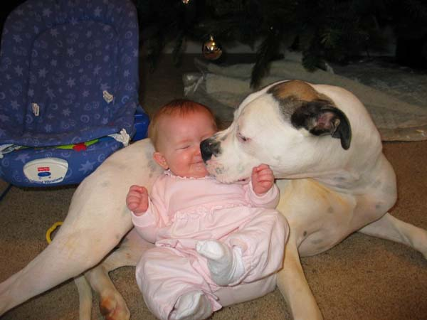 pit bull and baby Pitbull Dog Breed Facts