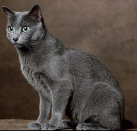 Are Russian Blue Cats Born With Green Eyes