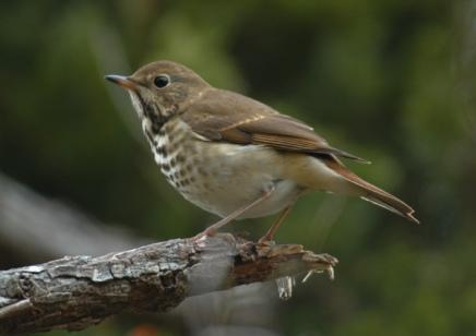 Dear Little Bird