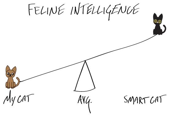 felineintelligence