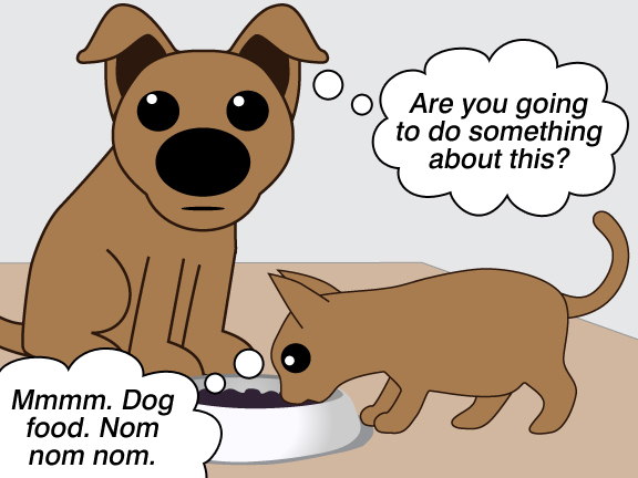 Quality Dog Food Without Potatos Or Chicken Or Alfalfa