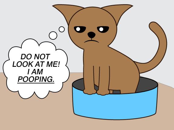 Cat Poops On Edge Of Litter Box