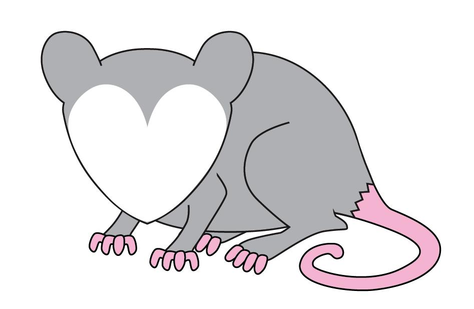 Cute Possum Drawing | www.pixshark.com - Images Galleries ...