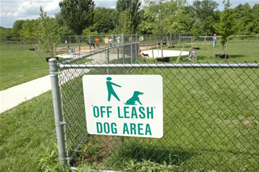The Pros And Cons of Dog Parks