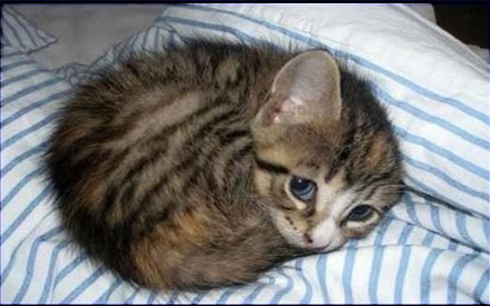 funny-cute-cat-sleeping-bed-scared