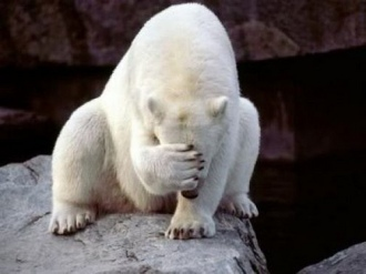Sometimes, polar bear facepalm is the only appropriate reaction.