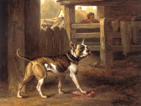 Philip_Reinagle_-_Bulldog