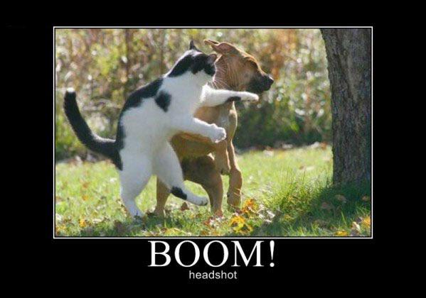 boom_headshot22